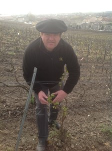 Pinot Noir in the best sites in Ay is already quite advanced and frost damage is a real danger, says Philippe Brun